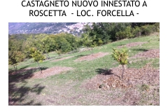 Castagneti prima e dopo lotto biologica.006