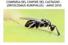Castagneti prima e dopo lotto biologica.008