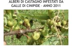 Castagneti prima e dopo lotto biologica.009