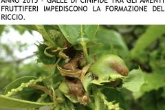 Castagneti prima e dopo lotto biologica.012