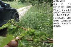 Castagneti prima e dopo lotto biologica.014