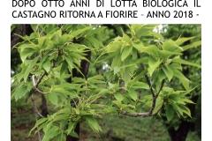 Castagneti prima e dopo lotto biologica.017