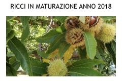 Castagneti prima e dopo lotto biologica.018