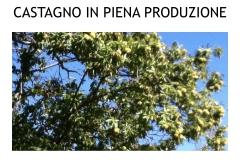 Castagneti prima e dopo lotto biologica.022