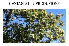 Castagneti prima e dopo lotto biologica.023