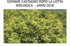 Castagneti prima e dopo lotto biologica.024