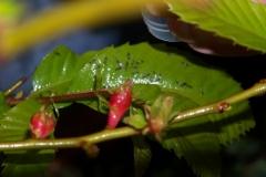insetti 011