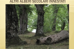 Presentazione _Castagna Roscetta_ copia.011