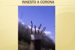 Presentazione _Castagna Roscetta_ copia.015
