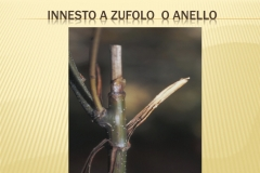 Presentazione _Castagna Roscetta_ copia.016