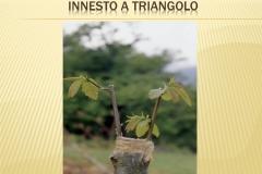 Presentazione _Castagna Roscetta_ copia.017