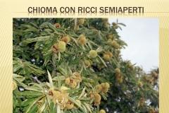 Presentazione _Castagna Roscetta_ copia.012