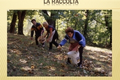 Presentazione _Castagna Roscetta_ copia.019