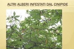 Presentazione _Castagna Roscetta_ copia.029