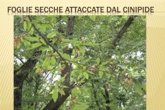 Presentazione _Castagna Roscetta_ copia.030